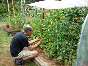 Jurgen Goering tends is tomatoes in his lush organic food garden in has backyard, and mulls the Orwellian implications of BC Hydro's forced installation of a smart meter on his home. (Photo © Kim Goldberg)